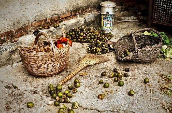 eh0219_fresh-nut.jpg