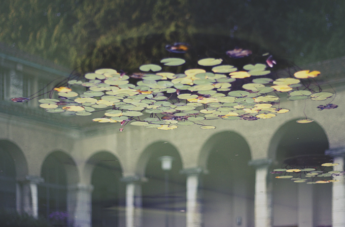 Water Lilies Above Arches