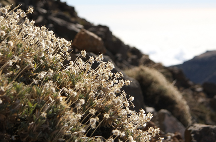 Vegetation At 2500m