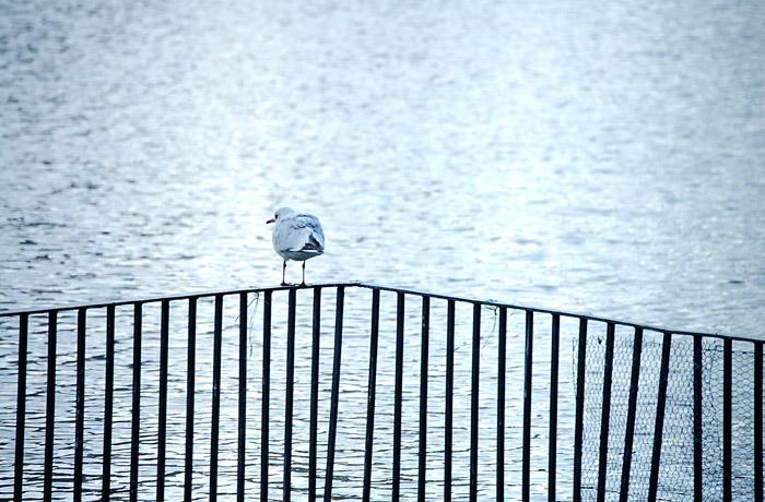 jh0230_dove.jpg