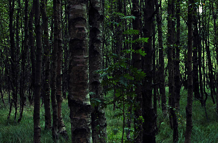 jh0303_forest.jpg