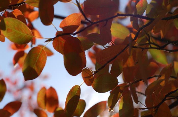 jh0322_leafs.jpg