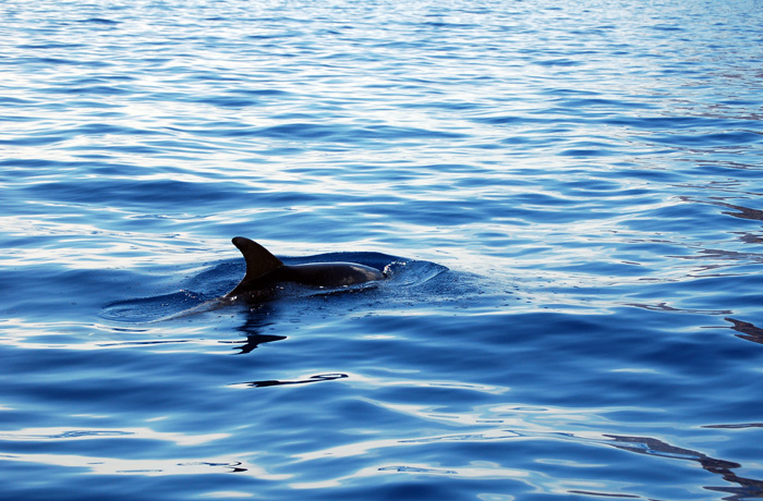 jh0347_dolphin.jpg