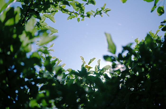 jh0358_sun_tree.jpg