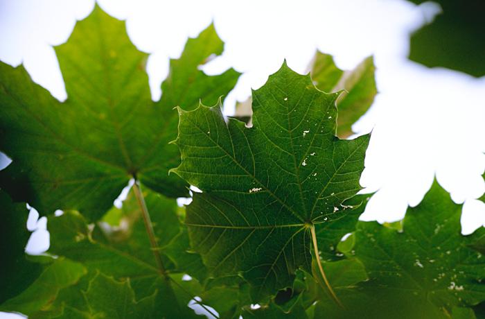 Leaf me