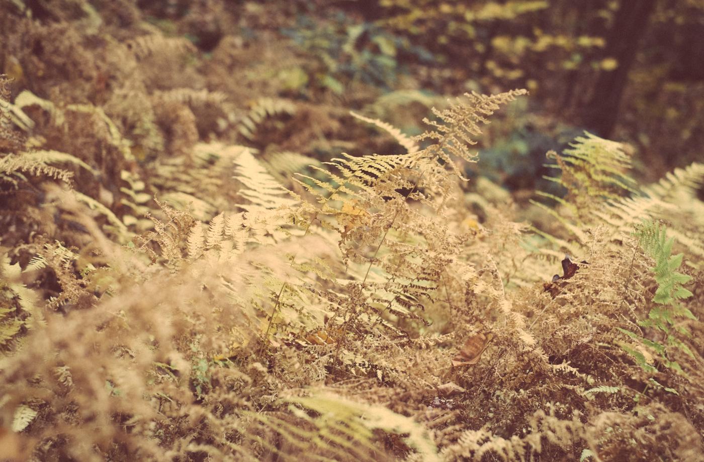 Fall Fern