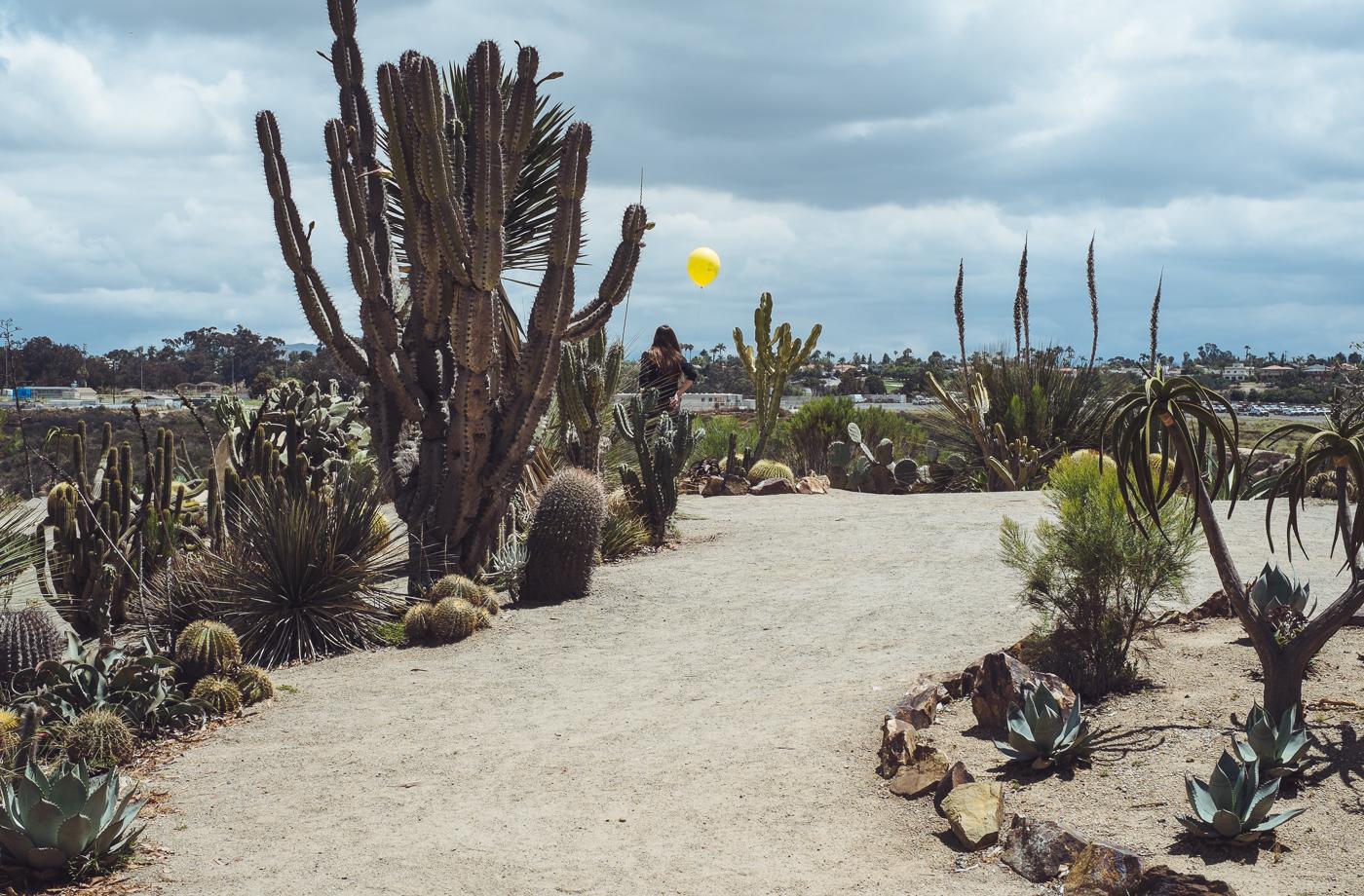 Balloon Amongst Cacti