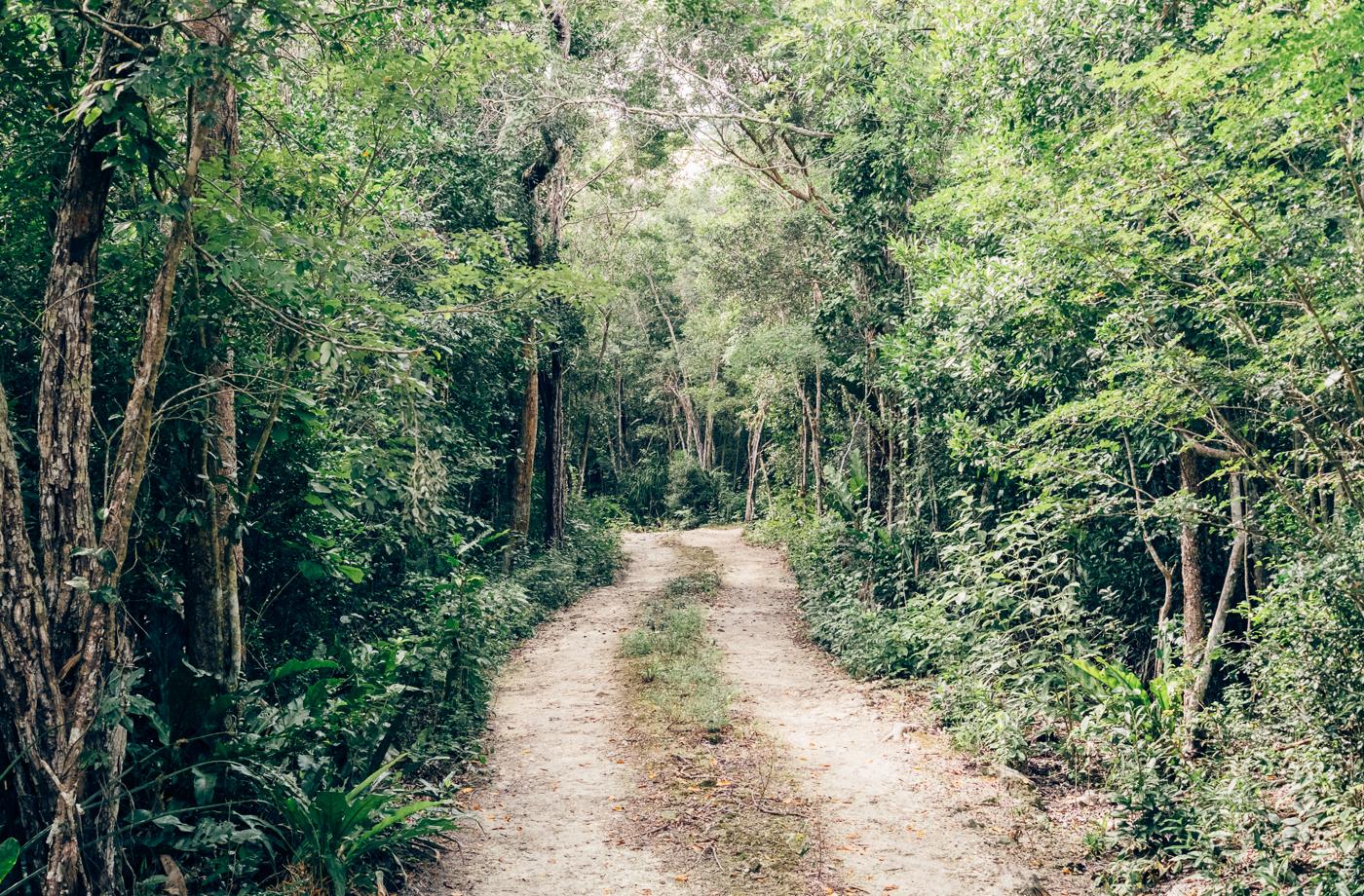 Yucatán Jungle