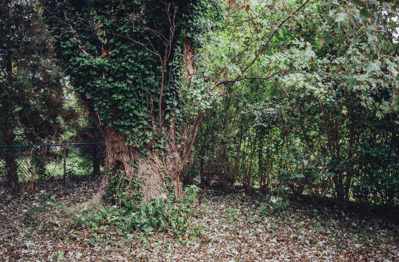 Overgrown Church Yard