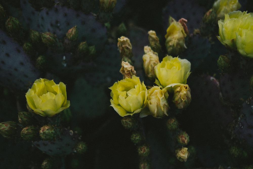 EH2135_Desert-Rose.jpg