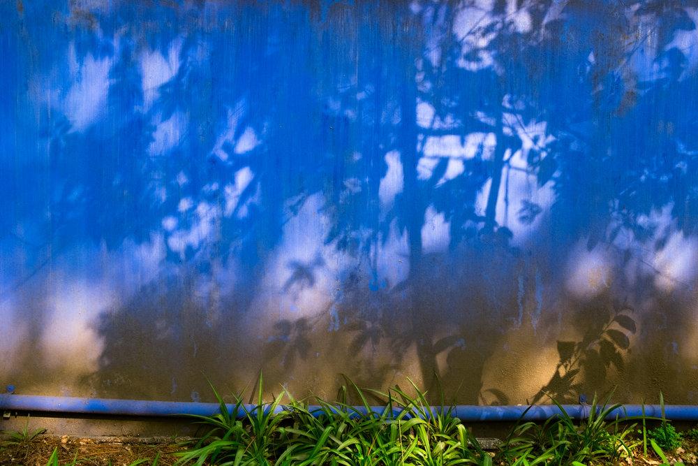 EH2174_En-El-Jardin-De-Casa-Azul.jpg