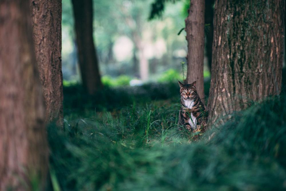 JH2216_cat.jpg