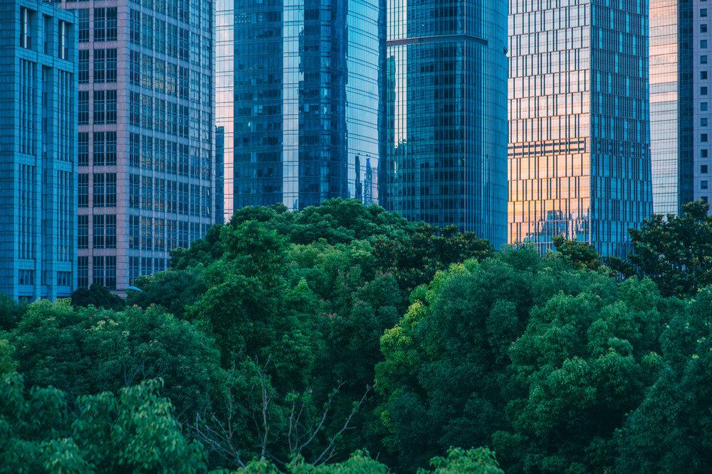 JH2245_city-treeline.jpg