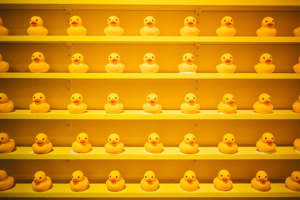 JH9999_ducks.jpg