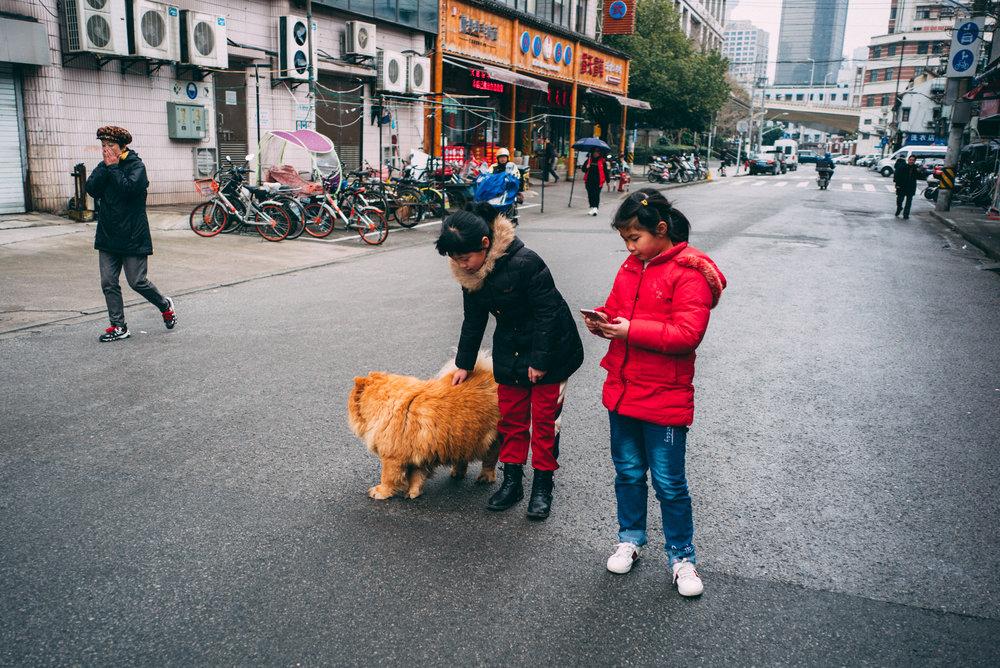 JH9999_pet-phone.jpg