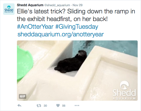 fundraising-with-social-media-shedd-aquarium-giving-tuesday-otter-ellie-4.png