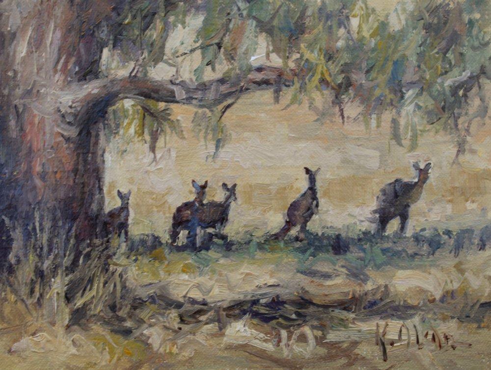 Wild Kangaroos, Yarra Valley, Melbourne