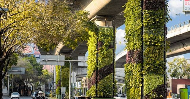 @verdmx is helping Mexico City reduce pollution from their motorway system by installing vertical gardens onto their columns. This all began when 80,000 Mexican drivers signed a petition led by Via Verde to gain local government approval. The veritical gardens rely on automated and monitored micro-spraying system to keep the plants healthy in hopes to filter the 27,000 tonnes of exhaust fumes and provide cleaner oxygen.