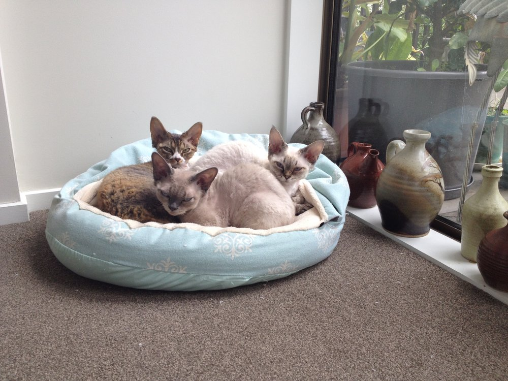 fuzzyard-cat-cubby-bed-juicy_large.jpg