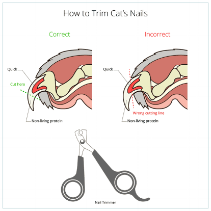 how-to-trim-cats-nails-instruction.png