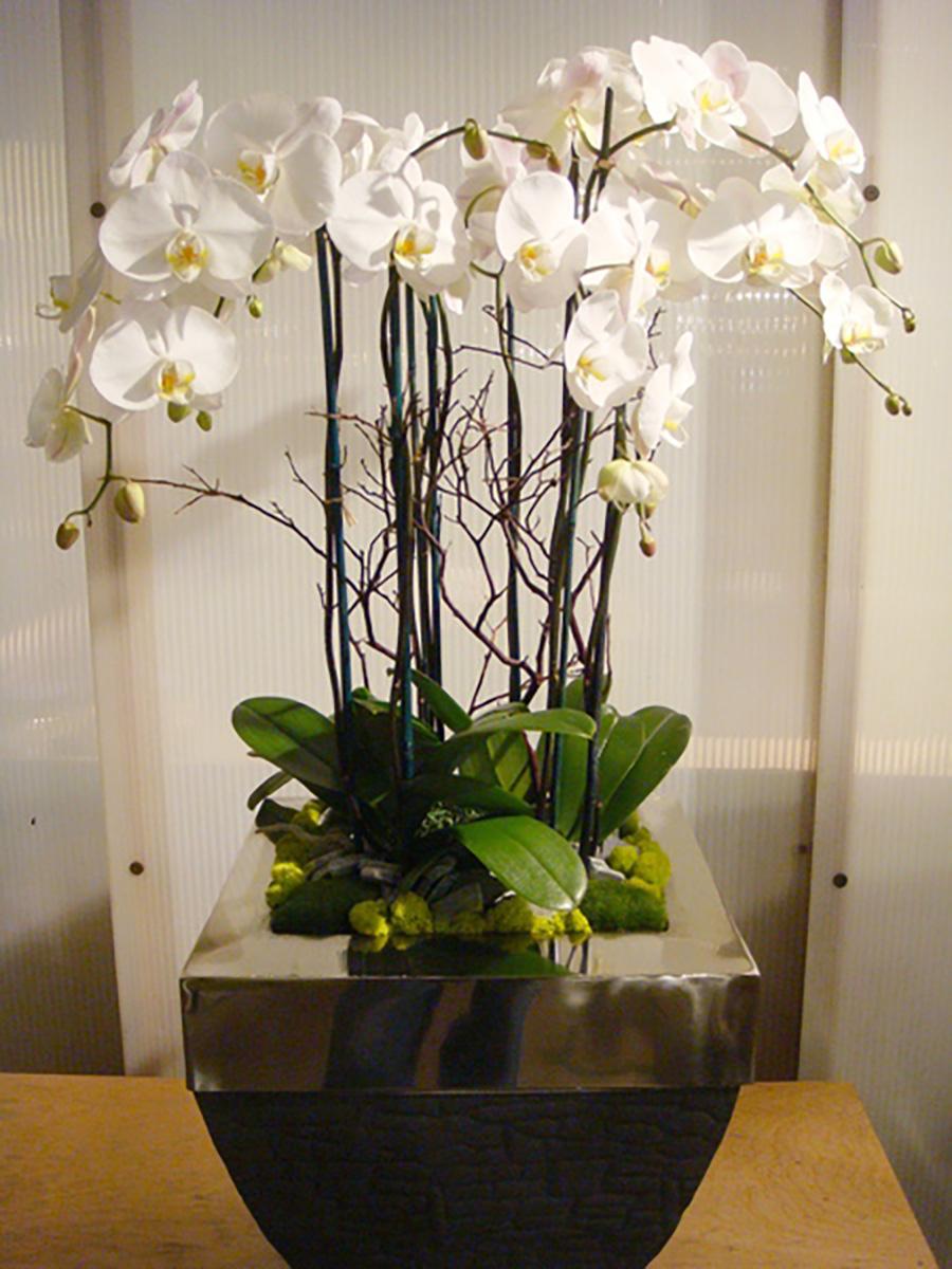 1000x6008_3_11-Modern-Orchid-Planter-350.jpg