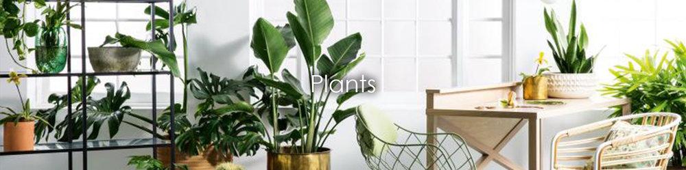 plant topper a.jpg