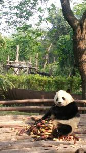 #OsoPanda #Panda