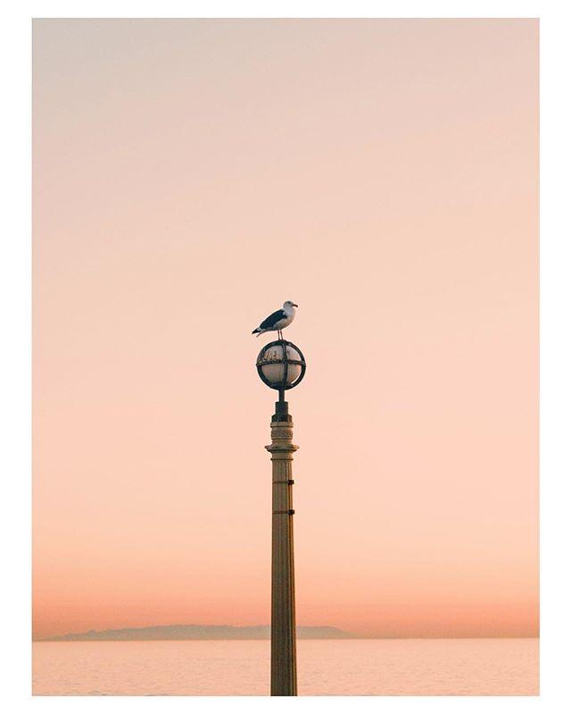gull patrol