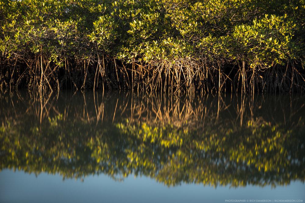 Loreto Bay Mangrove.jpg