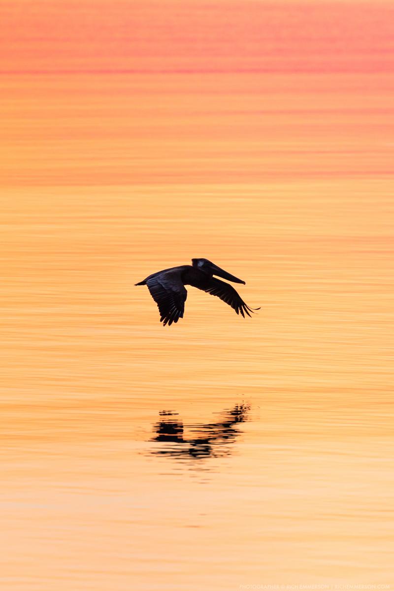 Pelican Sunrise 1.jpg