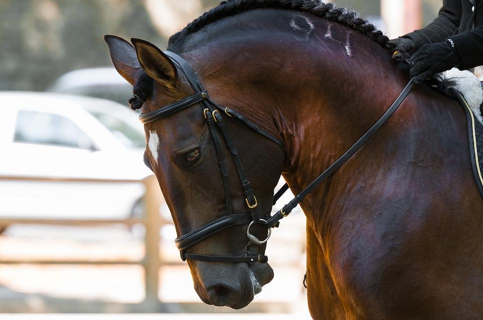 horse-1966517_960_720_CC.jpg