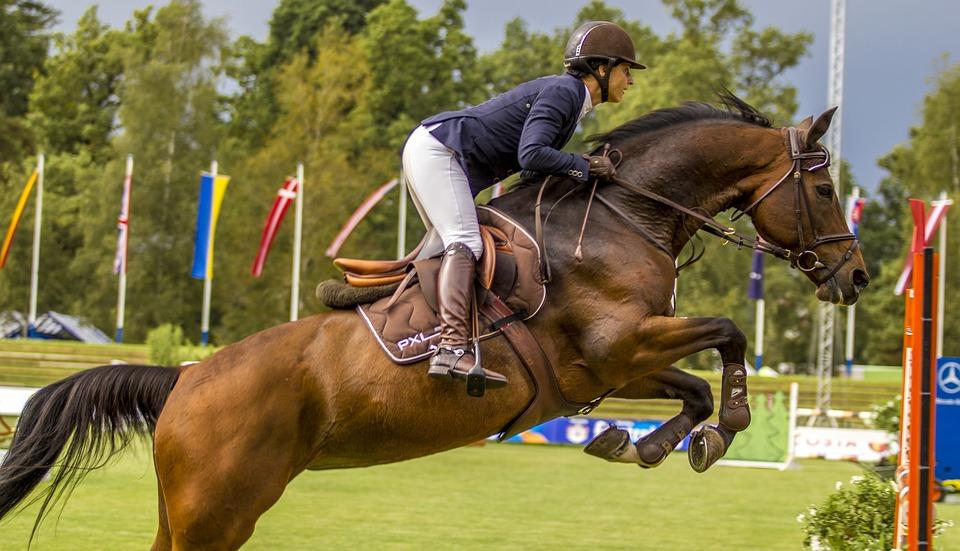 saddle-horse-1969653_960_720_CC.jpg