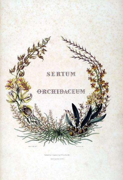 409px-Sertum_-_Lindley_-_frontispiece