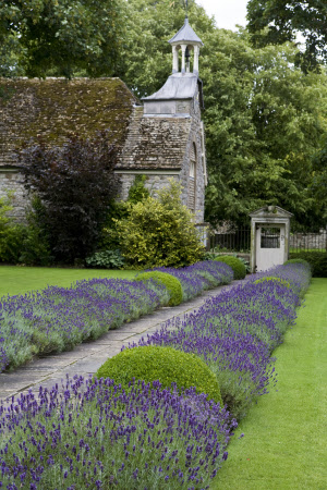 Lavender flanking the path in the garden at Avebury Manor, Wiltshire