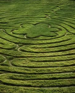 labyrinth-244x300
