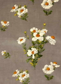 icelandic-poppies-velvet-grey-by-g-p--j-baker