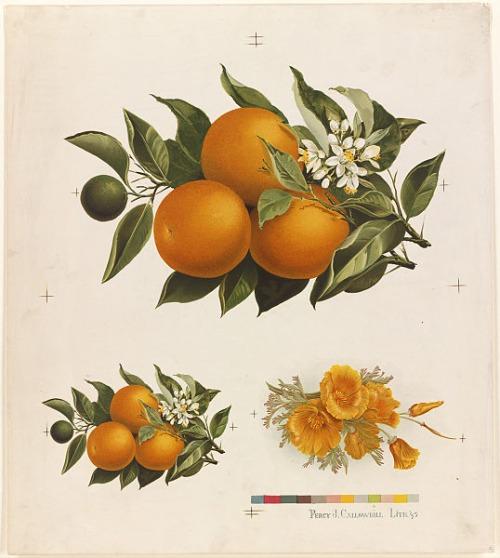 orangeandpoppies