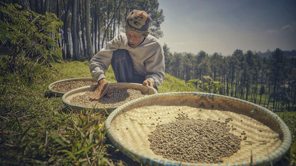 After collecting the beans and washing them, they are sun dried for several days. After a many days of hard work, the collectors get a few days off to sip coffee and wait for the moisutre content in the beans to dip below 10%, the perfect exporet quality.