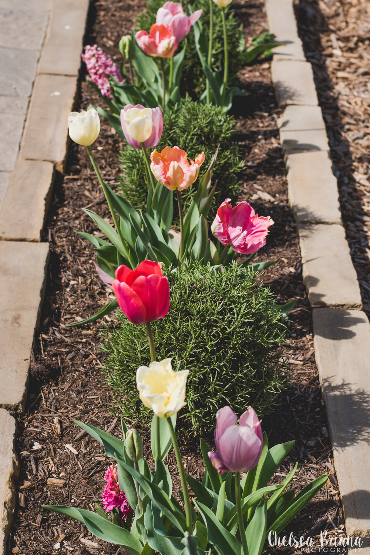 magnolia market flowers
