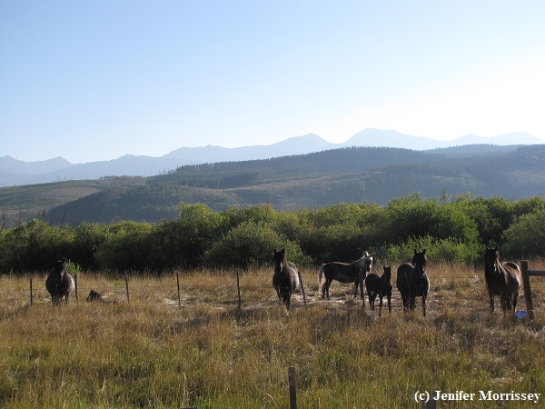 170828 ponies at pasture.jpg