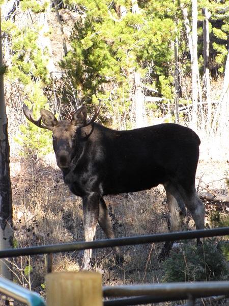 171016 moose.jpg