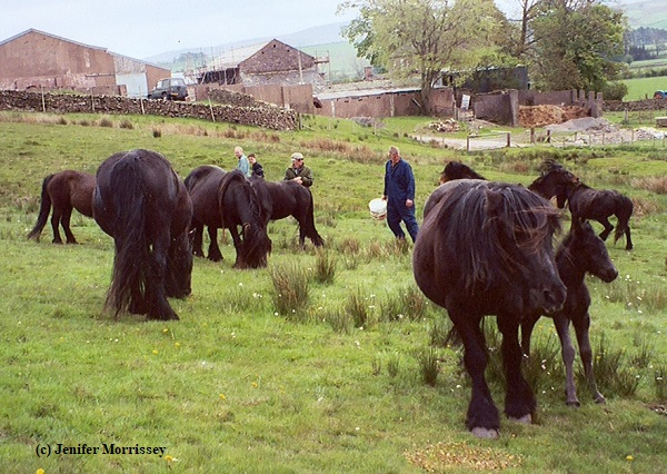 0505 Bybeck herd.jpg