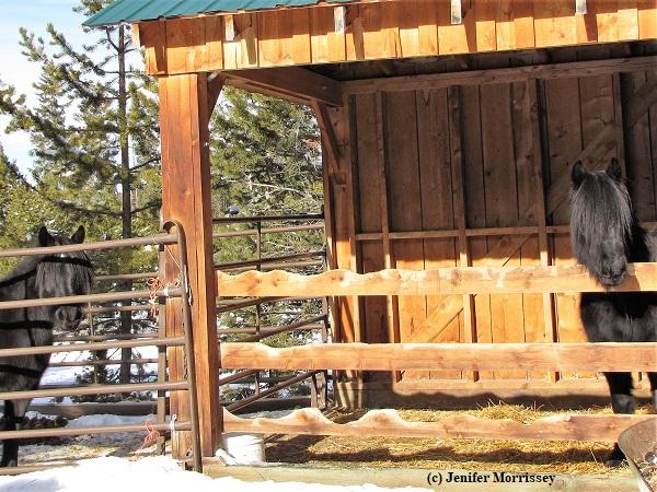 180124 Rose Madie foaling shed.JPG