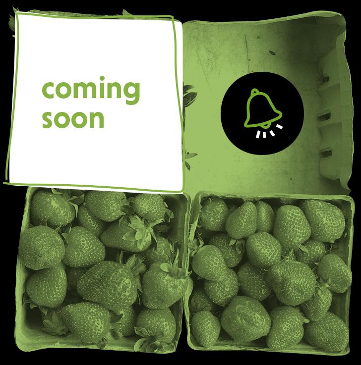 Orbis fresh coming soon