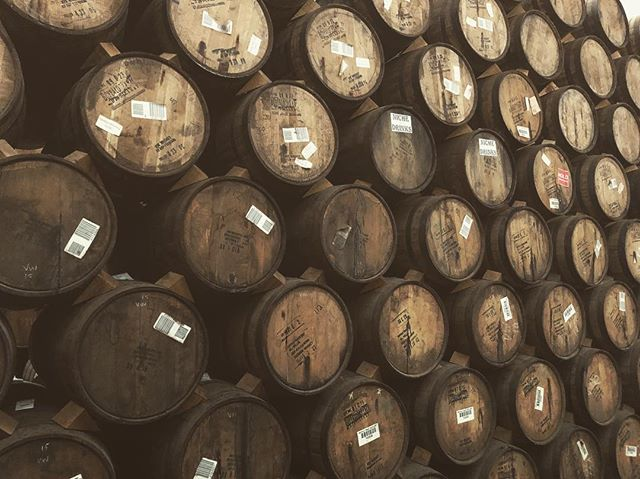 Sleeping beauties #Tequila #barrelaged #agave #jalisco #nationaltequiladay #corazontequila