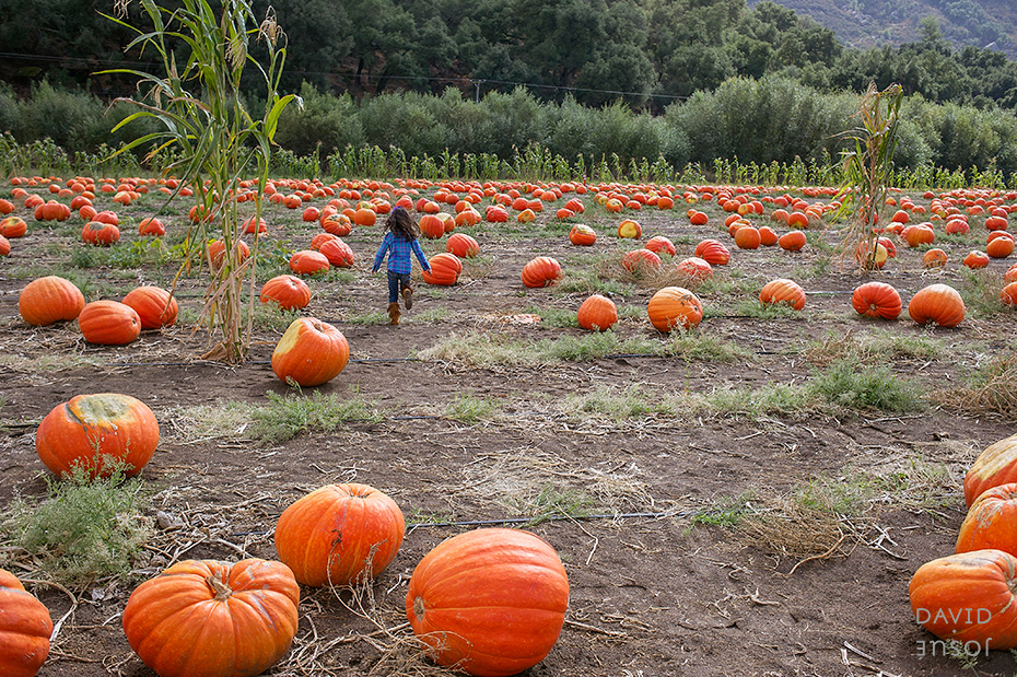 0020_cumple_suegro_bates-nut-farm-pumpkin-patch_101013-edit