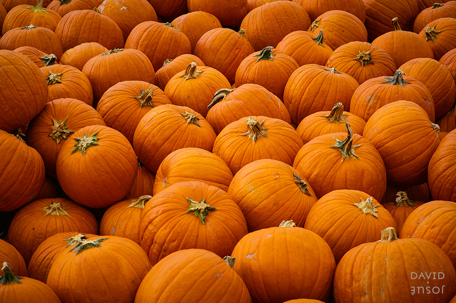 0076_cumple_suegro_bates-nut-farm-pumpkin-patch_101013-edit