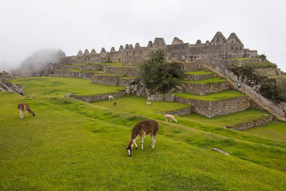IMG_3519Inka Jungle Llama.jpg