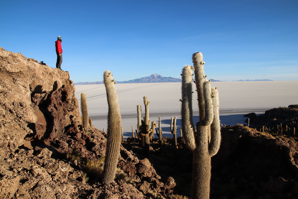 Desert Cactus in Bolivia.jpg