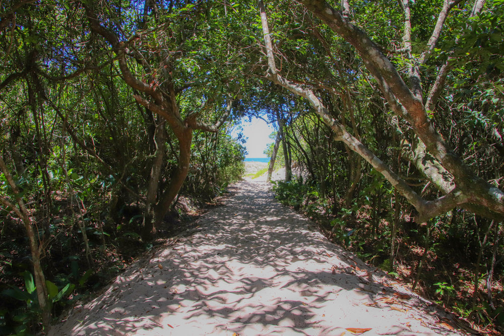 beach-jungle-florianopolis.jpg